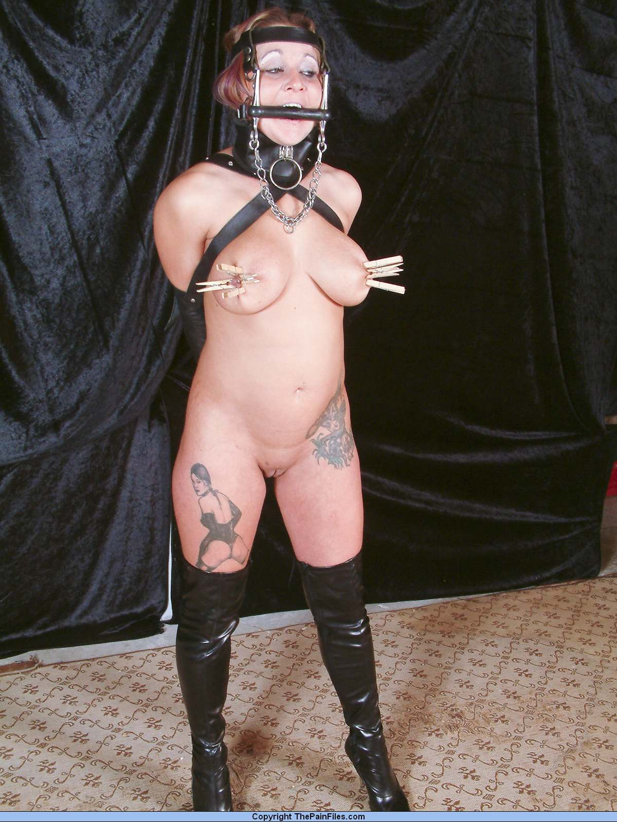 Ponygirl slave training